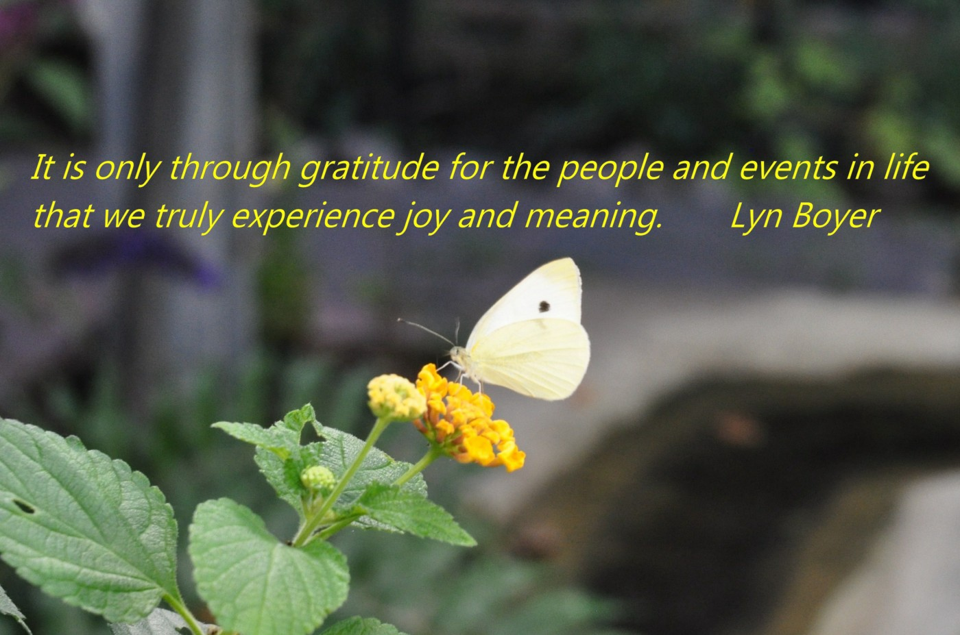 It is only through gratitude for the people and events in life that we truly experience joy and meaning. Lyn Boyer